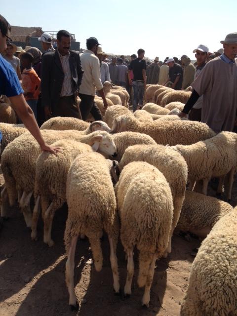 Eid al Adha in Morocco: MarocMama {Parenting and Faith}