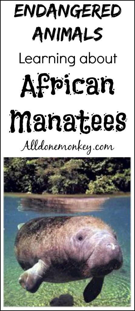 Endangered Animals: Learning about African Manatees | Alldonemonkey.com