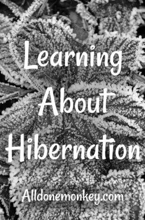 Learning About Hibernation: Resources for Kids