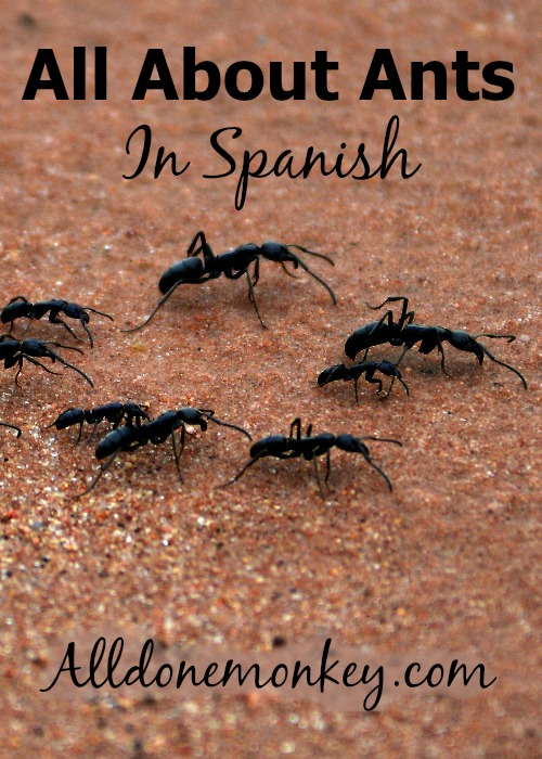 Learning All About Ants in Spanish | Alldonemonkey.com