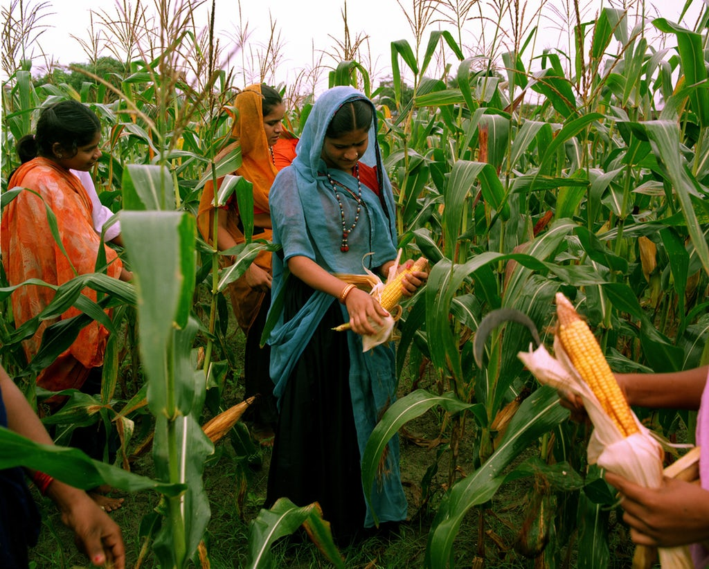 Women learning about agriculture at the Barli Development Institute for Rural Women in Indore, India. Copyright © Bahá'í International Community